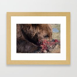 Hungry Alaskan Grizzly Bear - Eating Raw Meat Framed Art Print