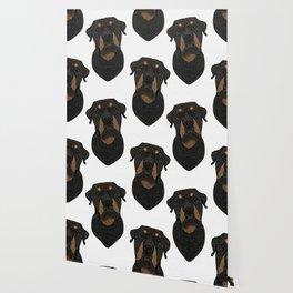Rottweiler - Teddy Wallpaper