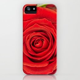 Red Rose for Love iPhone Case