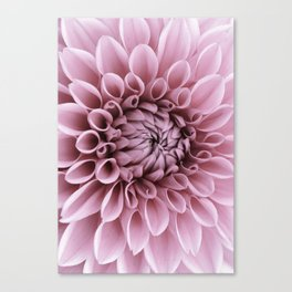 #pink #flower Canvas Print