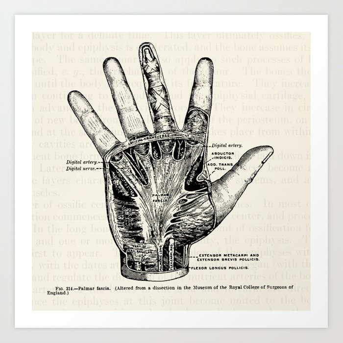 Vintage Anatomy Illustration Of The Palm Of The Hand Art Print By
