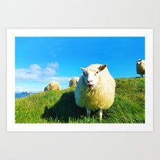 Sheeps in Iceland with Green Field Art Print