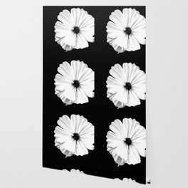 Springtime Aneomone In Black And White Wallpaper