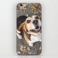beagle iPhone & iPod Skins featuring Beagle by Renata's Photobox