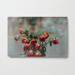 Windowsill Roses no. 1 Metal Print
