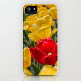Many yellow tulips and one red iPhone Case