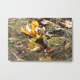 Chipmunk V Metal Print