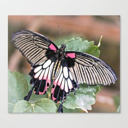 Majestic Tropical Butterfly Canvas Print