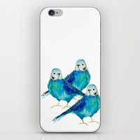 craftberrybush iPhone & iPod Skins featuring Blue budgie watercolor by craftberrybush