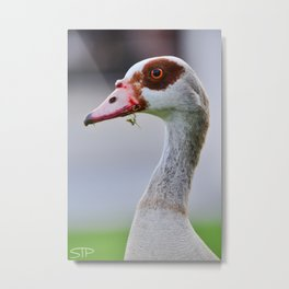 Egyptian Goose Metal Print