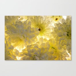 Lighted Chrysanthemums Canvas Print