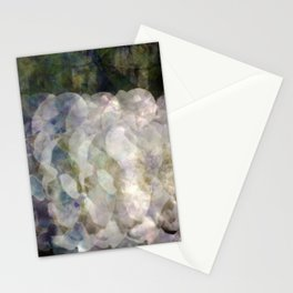 White Rose Exposures Stationery Cards