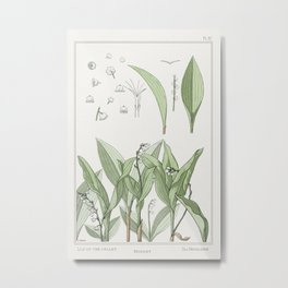 Muguet (lily of the valley) from La Plante et ses Applications ornementales (1896) illustrated by Ma Metal Print