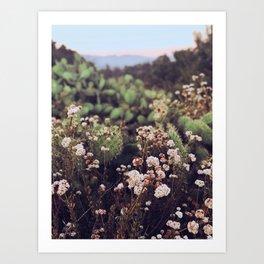 Flowers & Cactus at sunset Art Print