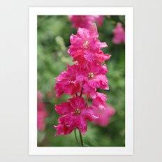 String of Pink Art Print