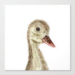 smiling little duck Canvas Print