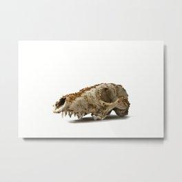 Shimmering fox Metal Print