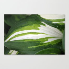 Shades of Green and White  Canvas Print