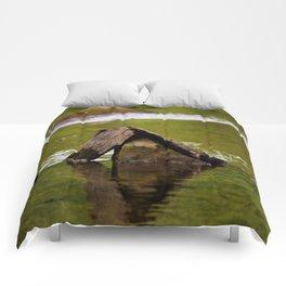Ancient Comforters