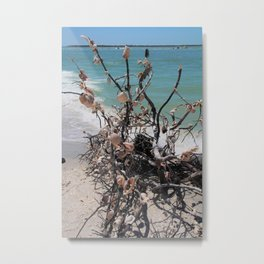 Sea Shell Samba I Metal Print