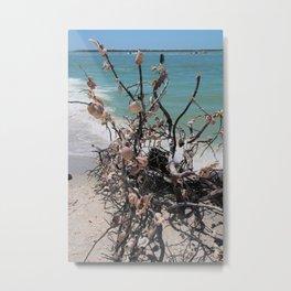 Sea Shell Samba I Metal Print