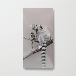 RINGTAILED LEMUR FAMILY by Monika Strigel Metal Print