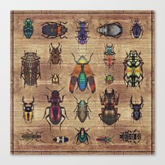 Insectarium III Canvas Print