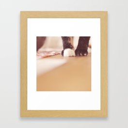 paws Framed Art Print