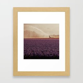 Hyacinth field #3 Framed Art Print