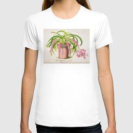 Aerides Affine Var Roseum Vintage Botanical Floral Flower Plant Scientific T-shirt