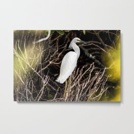 A great white egret is perched in some brush just north of the Shuttle Landing Facility at NASAs Ken Metal Print