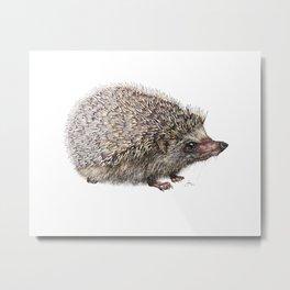 African Pygmy Hedgehog Metal Print