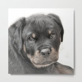 Rottweiler puppy Metal Print
