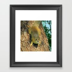 Cute little squirrel Framed Art Print