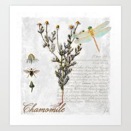 Chamomile Herb, Dragonfly Bumble Bee Botanical painting, Cottage style Art Print