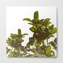 Green Branches Metal Print