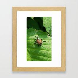 Japanese Beetle on Leaf Framed Art Print