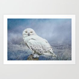 Snowy Owl in mist Art Print