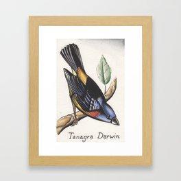 Darwin Finch Watercolor Framed Art Print