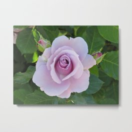 Bloom and Buds Paling to Purple Metal Print