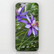 Meadow Dew iPhone & iPod Skin