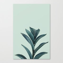 Teal Mint Plant Canvas Print
