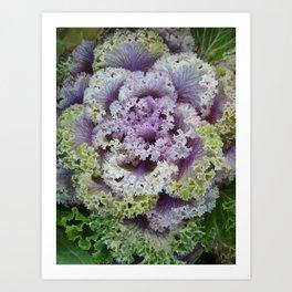 Little Cabbage Art Print