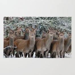 Herd Of Deer Rug