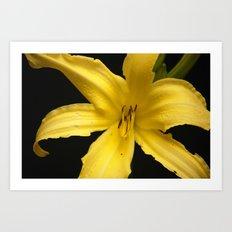 Yellow beauty Art Print