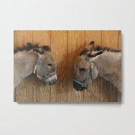 Mini Donkeys Metal Print
