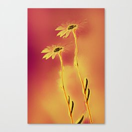 two yellow and red Daisies Canvas Print