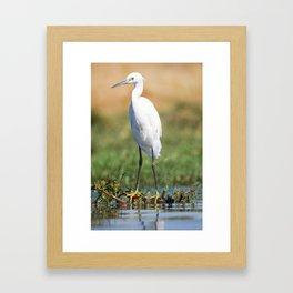 Fishing bird Framed Art Print