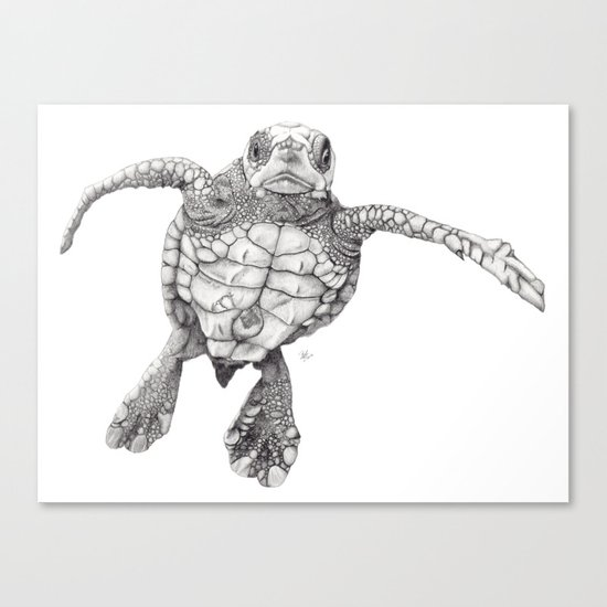 Chelonioidea (the turtle) Canvas Print