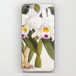 Vintage White Lindenia Orchid iPhone Skin